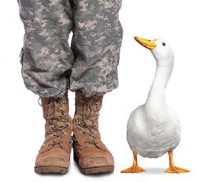 Duck soldier2 jpg